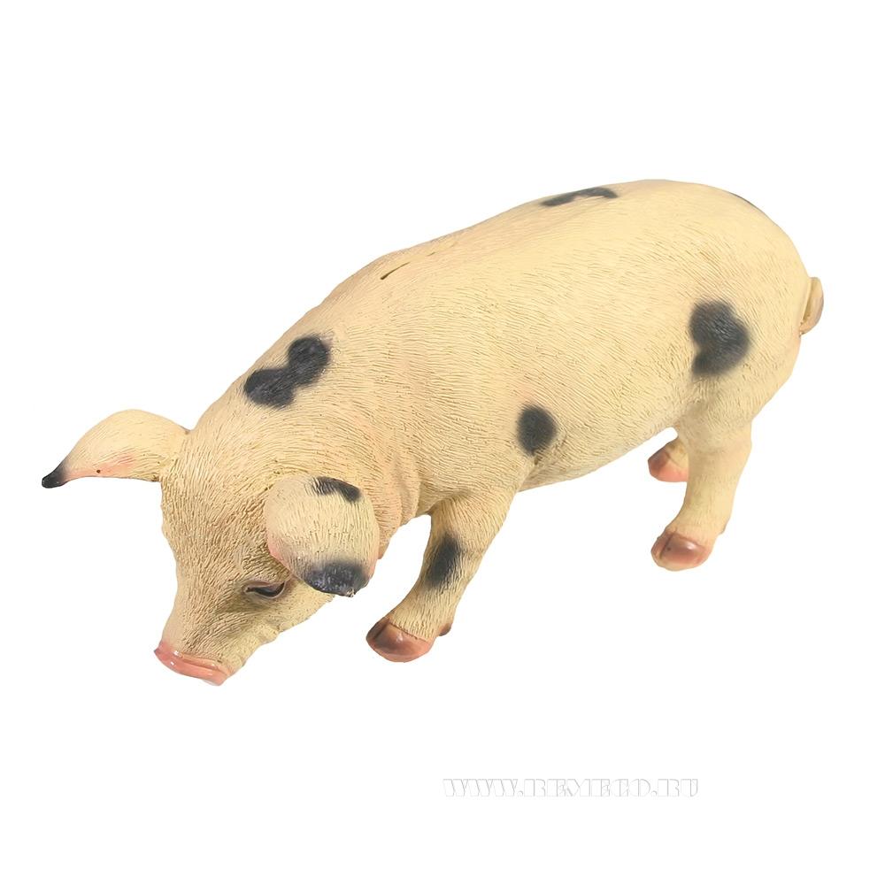 Копилка Свинка Фуся L29.5W12H13 (в пятнах) оптом