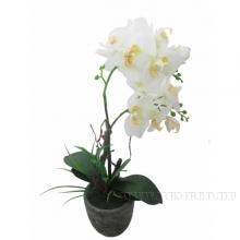 Цветочная композиция Орхидея, L14 W14 H26 см