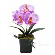 Цветочная композиция Орхидея, L7 W7 H20 см (б/инд.уп.)