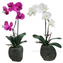 Цветочная композиция Цветок, L15 W10 H43 см, 2в.