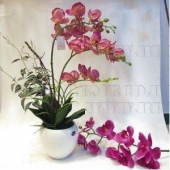 Декоративные цветы, ракушки, камушки