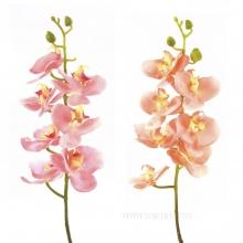 Орхидея, 76см, 2вида