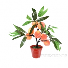 Декоративные овощи, деревья и цветы